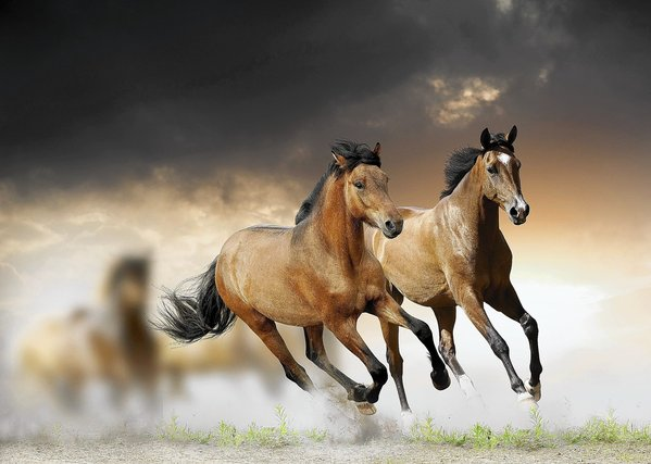 horse sense in psychotherapy